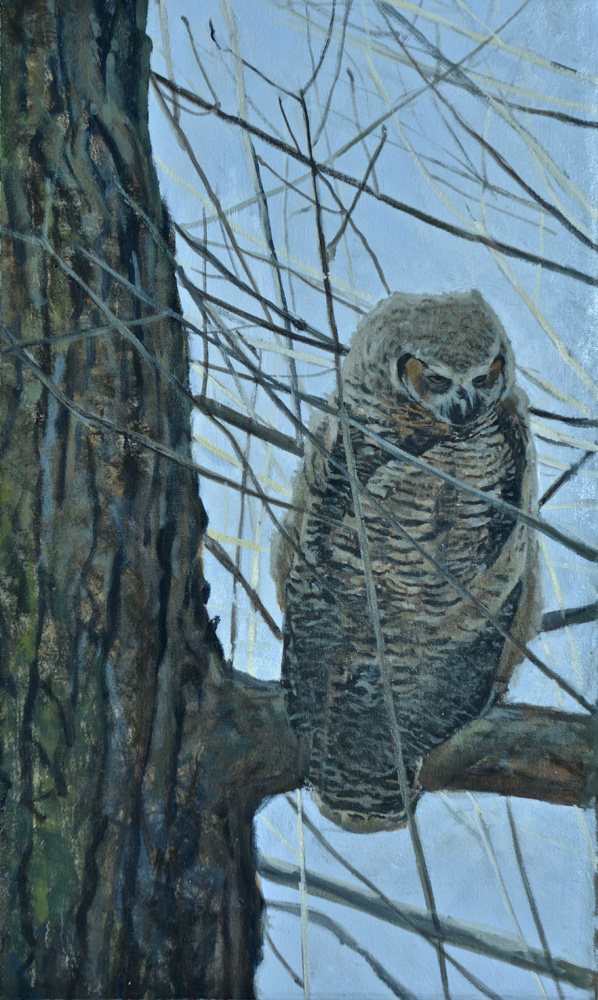 First Light, Young Great-Horned Owl